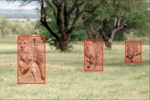 object detection labeling